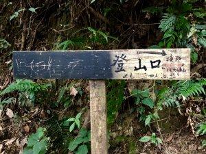 鳶嘴西稜香杉秘境走大崠山