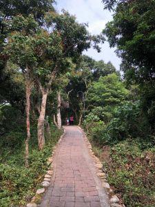 萬里長城步道+藤山步道