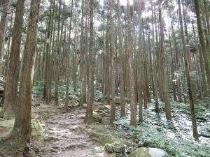 20170930_馬武督森林+外鳥嘴山
