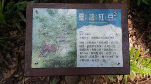 橫嶺山自然步道 2017 08 18
