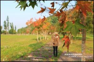 季節限定石門水庫楓好紅