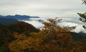 北插之美-霧淞、山毛櫸變色、雲海