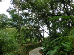 飛龍步道.石獅腳步道.樟樹步道