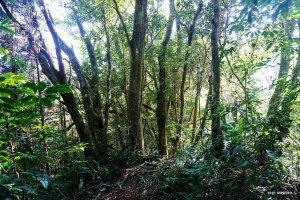 【新竹】荒蕪的麥樹仁山