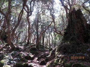 20180303 塔曼山