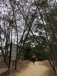 龍過脈步道