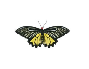 【森林之寶】富源國家森林遊樂區步道群-黃裳鳳蝶