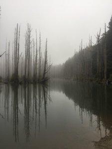 迷霧水漾森林