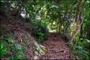 馬崙山..華麗的森林步道..谷關七雄
