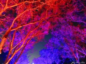 20150219~北投復興三路~夜櫻 星空