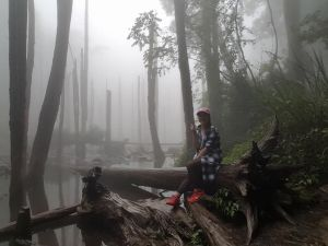 南投 忘憂森林步道