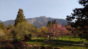水山巨木+對高岳+姊妹潭