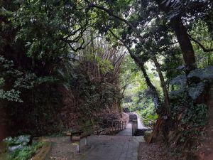 20171014龍過脈森林步道