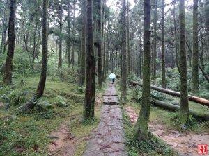 【台北市】頂山石梯嶺步道風雨行