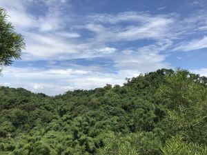 林安森林公園(大寮山)遊東源