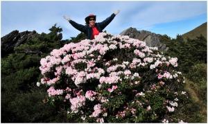 2016/05/09 石門山的高山杜鵑