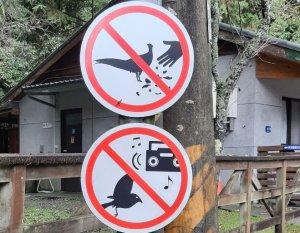 【新聞】於大雪山林道餵食野鳥付出代價! 東勢林管處再次呼籲民眾遵守賞鳥倫理五「不」曲以免觸法