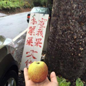 福壽山 梨山 武陵