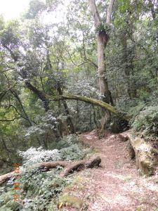 石壁山-嘉南雲峰