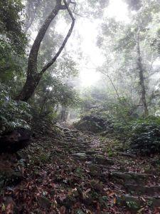 苗栗馬那邦山(珠湖線)20180630