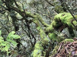新竹尖石-宇老-魯壁山步道