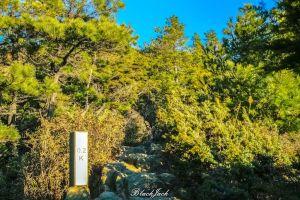 台灣池步道(合歡北峰+小溪營地+北峰名樹)