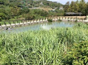 貓空樟樹樟湖環狀步道
