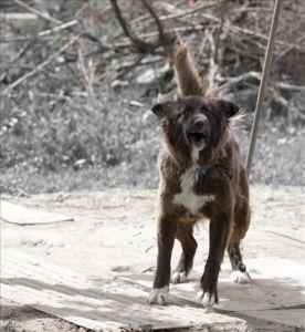 【新聞】預防狂犬病,大家齊努力