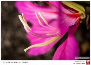 【台北士林】冬日暖陽.志成公園賞花