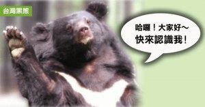 【保育】台灣黑熊小常識
