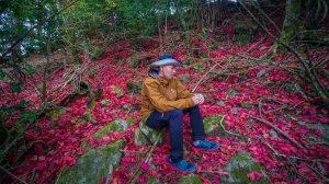 【季節限定】稍來山紅榨槭