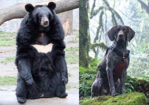 【動物】協助臺灣黑熊研究的排遺偵測犬