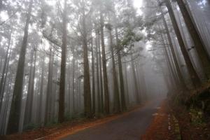 山岳之美--觀霧森林遊樂區