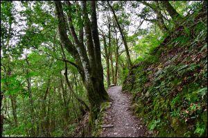 千年的對話~鎮西堡巨木森林 B區