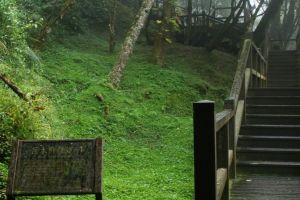 阿里山巨木群棧道雨中記行