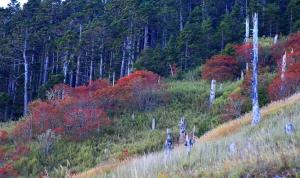 雪山下翠池賞巒大花楸
