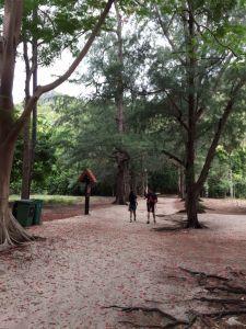 泰國華陰三百峰國家公園