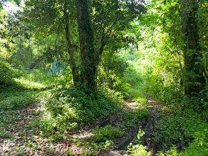 阿里山鄉神木之旅--拉拉喀斯1號神木及巨石神木