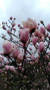 長在樹上的蓮花!