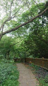 新莊青年公園牡丹亭步道