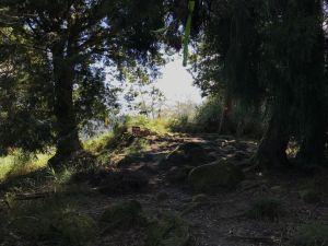 鹿屈山前峰 鹿屈山 水漾森林 林道O走