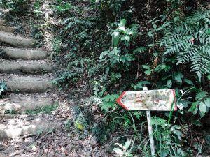 山天山夜爬郊山#1 二格山登山步道