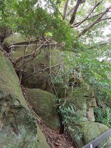芝山岩綠生態步道
