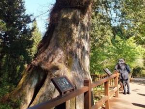【路線】阿里山森林遊樂區推薦步道
