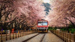 【攝影】櫻花拍攝的技巧