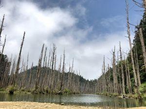 水漾森林單攻