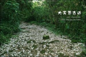 【路線】油桐花步道3