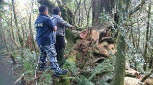 【新聞】警林協力合作日夜埋伏 查獲山老鼠竊取臺灣扁柏