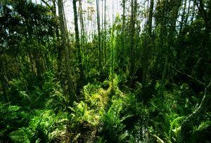 【新聞】林務局辦理生物多樣性系列活動 呼籲大眾重視生態保育