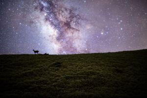 夜空中最亮的星,請照亮我前行